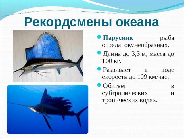 Рекордсмены океана Парусник – рыба отряда окунеобразных. Длина до 3,3 м, масса до 100 кг. Развивает в воде скорость до 109 км/час. Обитает в субтропических и тропических водах.