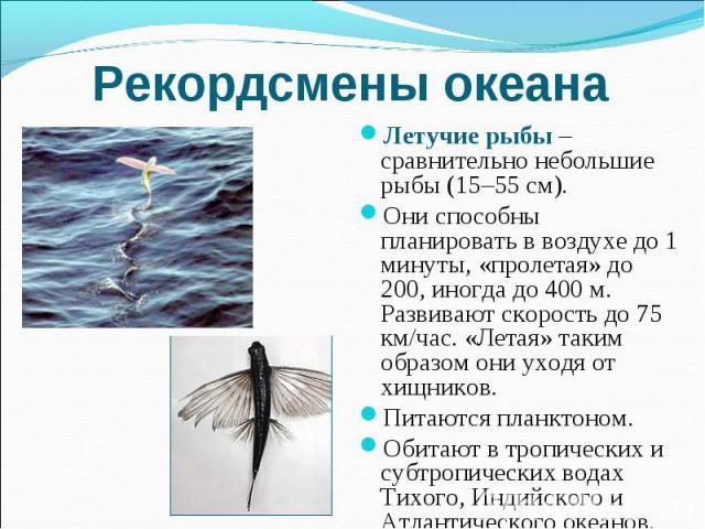 Рекордсмены океана Летучие рыбы – сравнительно небольшие рыбы (15–55 см). Они способны планировать в воздухе до 1 минуты, «пролетая» до 200, иногда до 400 м. Развивают скорость до 75 км/час. «Летая» таким образом они уходя от хищников. Питаются план…