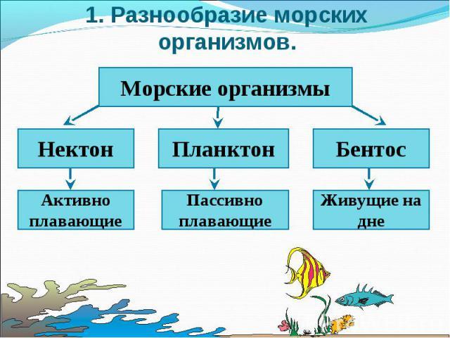 1. Разнообразие морских организмов. Морские организмы