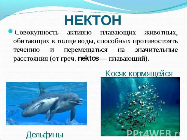 НЕКТОН Совокупность активно плавающих животных, обитающих в толще воды, способных противостоять течению и перемещаться на значительные расстояния (от греч. nektos — плавающий). Косяк кормящейся рыбы Дельфины