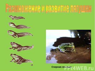 Размножение и развитие лягушки Озерная лягушка