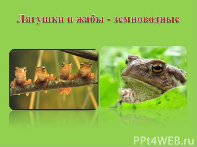 Лягушки и жабы - земноводные