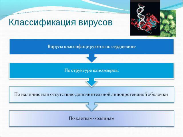 Классификация вирусовВирусы классифицируются по сердцевине По структуре капсомеров. По наличию или отсутствию дополнительной липопротеидной оболочки  По клеткам-хозяинам