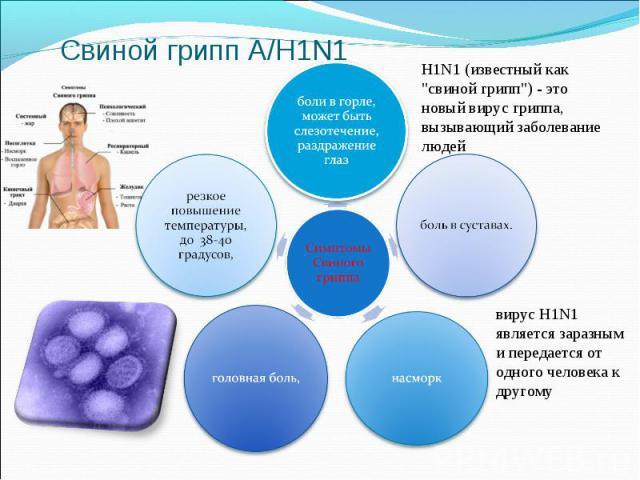 Свиной грипп А/H1N1H1N1 (известный как