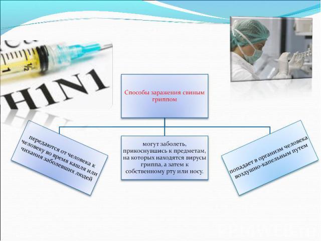 Способы заражения свиным гриппом
