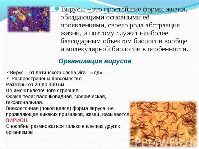 Вирусы – это простейшие формы жизни, обладающими основными её проявлениями, своего рода абстракция жизни, и поэтому служат наиболее благодарным объектом биологии вообще и молекулярной биологии в особенности. Вирус – от латинского слова vira – «яд». …