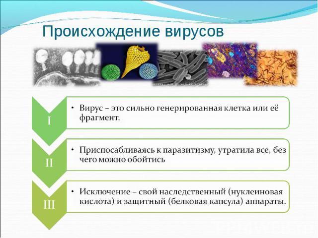 Происхождение вирусов Вирус – это сильно генерированная клетка или её фрагмент. Приспосабливаясь к паразитизму, утратила все, без чего можно обойтись Исключение – свой наследственный (нуклеиновая кислота) и защитный (белковая капсула) аппараты.