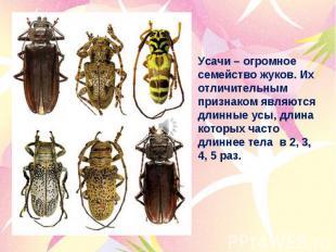 Усачи – огромное семейство жуков. Их отличительным признаком являются длинные ус