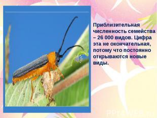 Приблизительная численность семейства – 26 000 видов. Цифра эта не окончательная
