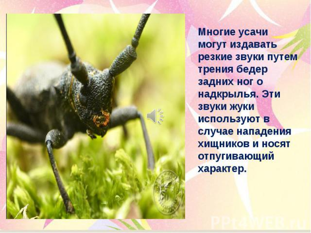 Многие усачи могут издавать резкие звуки путем трения бедер задних ног о надкрылья. Эти звуки жуки используют в случае нападения хищников и носят отпугивающий характер.