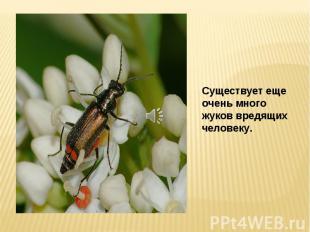 Существует еще очень много жуков вредящих человеку.