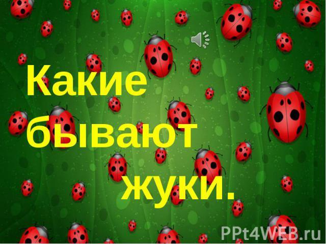 Какие бывают жуки