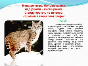 Меньше тигра, больше кошки, над ушами – кисти-рожки. С виду кроток, но не верь: