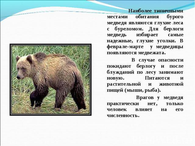 Наиболее типичными местами обитания бурого медведя являются глухие леса с буреломом. Для берлоги медведь избирает самые надежные, глухие уголки. В феврале-марте у медведицы появляются медвежата. В случае опасности покидают берлогу и после блужданий …