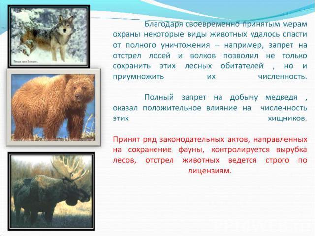 Благодаря своевременно принятым мерам охраны некоторые виды животных удалось спасти от полного уничтожения – например, запрет на отстрел лосей и волков позволил не только сохранить этих лесных обитателей , но и приумножить их численность. Полный зап…