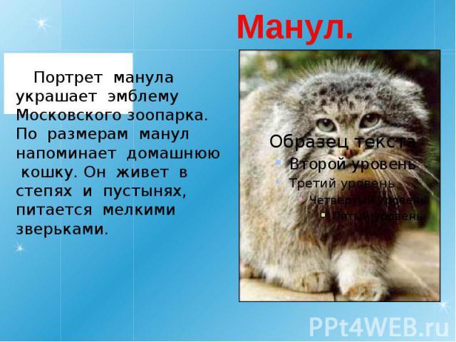 Манул. Портрет манула украшает эмблему Московского зоопарка. По размерам манул напоминает домашнюю кошку. Он живет в степях и пустынях, питается мелкими зверьками.