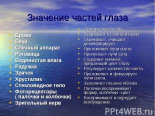 Значение частей глаза Брови Веки Слезный аппарат Роговица Водянистая влага Радуж