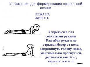 Упражнения для формирования правильной осанки ЛЕЖА НА ЖИВОТЕ Упереться в пол сог
