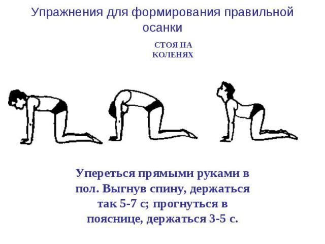 Упражнения для формирования правильной осанки СТОЯ НА КОЛЕНЯХ Упереться прямыми руками в пол. Выгнув спину, держаться так 5-7 с; прогнуться в пояснице, держаться 3-5 с.