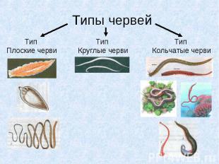 Типы червейТип Плоские черви Тип Круглые черви Тип Кольчатые черви