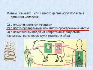 Финны бычьего или свиного цепня могут попасть в организм человека: 1) с плохо вы