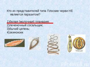 Кто из представителей типа Плоские черви НЕ является паразитом? 1)белая (молочна