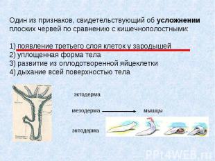 Один из признаков, свидетельствующий об усложнении плоских червей по сравнению с