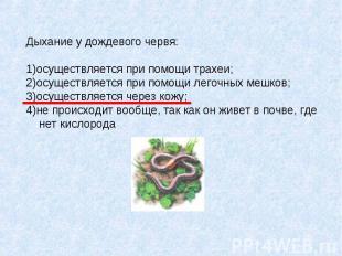 Дыхание у дождевого червя: 1)осуществляется при помощи трахеи; 2)осуществляется
