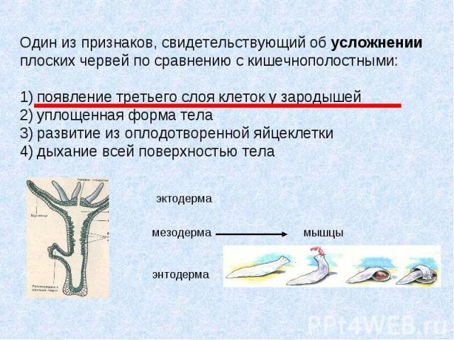 Один из признаков, свидетельствующий об усложнении плоских червей по сравнению с кишечнополостными: 1) появление третьего слоя клеток у зародышей 2) уплощенная форма тела 3) развитие из оплодотворенной яйцеклетки 4) дыхание всей поверхностью тела