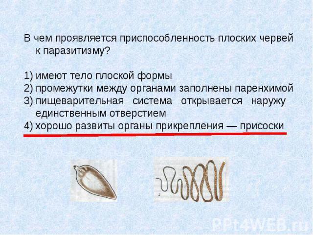 В чем проявляется приспособленность плоских червей к паразитизму? 1) имеют тело плоской формы 2) промежутки между органами заполнены паренхимой 3) пищеварительная система открывается наружу единственным отверстием 4) хорошо развиты органы прикреплен…