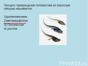 Процесс превращения головастика во взрослую лягушку называется: 1)размножением 2