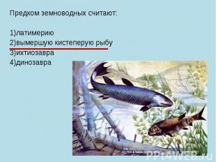 Предком земноводных считают: 1)латимерию 2)вымершую кистеперую рыбу 3)ихтиозавра