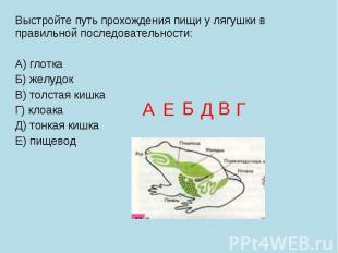 Выстройте путь прохождения пищи у лягушки в правильной последовательности: А) гл