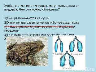 Жабы, в отличие от лягушек, могут жить вдали от водоема. Чем это можно объяснить
