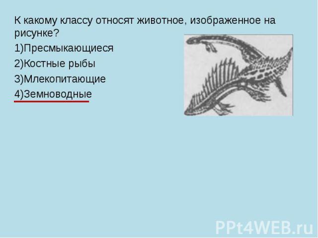 К какому классу относят животное, изображенное на рисунке? 1)Пресмыкающиеся 2)Костные рыбы 3)Млекопитающие 4)Земноводные