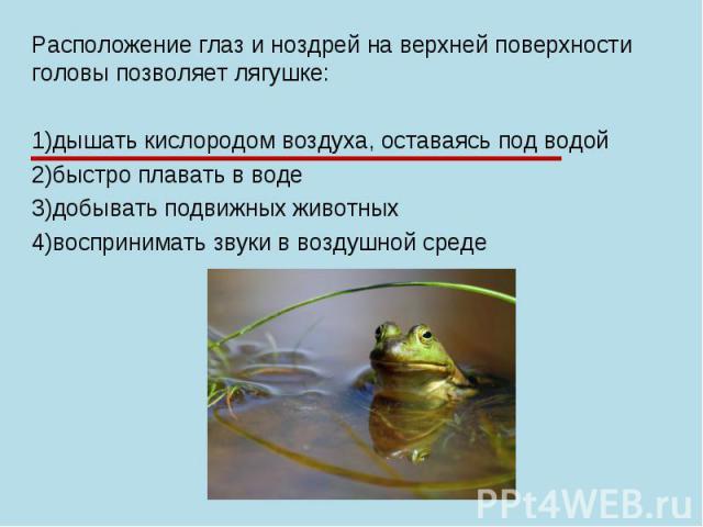 Расположение глаз и ноздрей на верхней поверхности головы позволяет лягушке: 1)дышать кислородом воздуха, оставаясь под водой 2)быстро плавать в воде 3)добывать подвижных животных 4)воспринимать звуки в воздушной среде