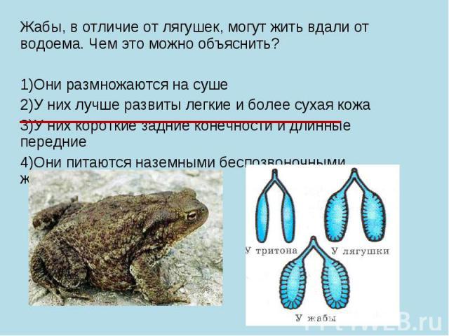 Жабы, в отличие от лягушек, могут жить вдали от водоема. Чем это можно объяснить? 1)Они размножаются на суше 2)У них лучше развиты легкие и более сухая кожа 3)У них короткие задние конечности и длинные передние 4)Они питаются наземными беспозвоночны…