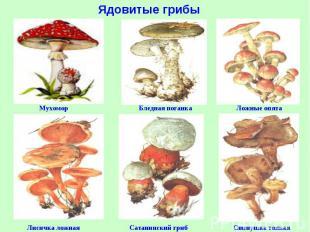 съедобные грибы белгородской области фото и описание