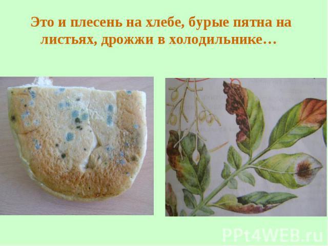 оранжевая плесень на хлебе результате карточка или