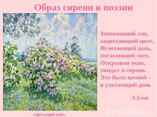 Образ сирени в поэзии Запевающий сон, зацветающий цвет, Исчезающий день, погасаю