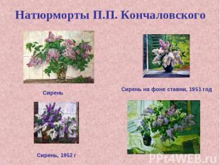 Натюрморты П.П. Кончаловского Сирень Сирень на фоне ставни, 1951 год Сирень, 195
