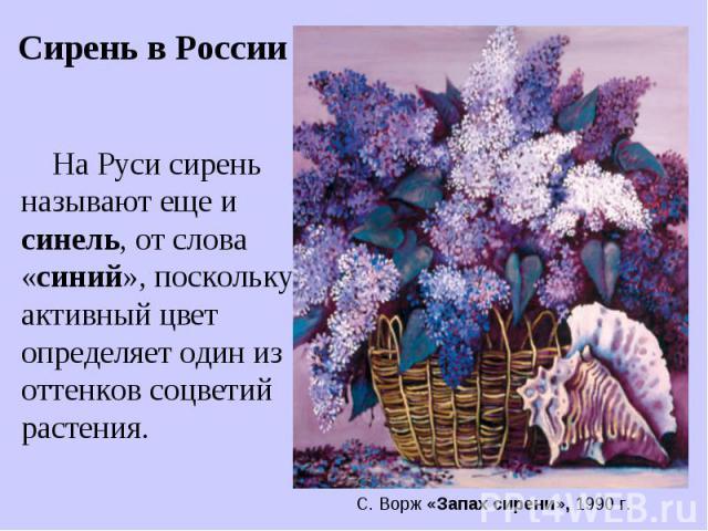 Сирень в России На Руси сирень называют еще и синель, от слова «синий», поскольку активный цвет определяет один из оттенков соцветий растения. С. Ворж «Запах сирени», 1990 г.