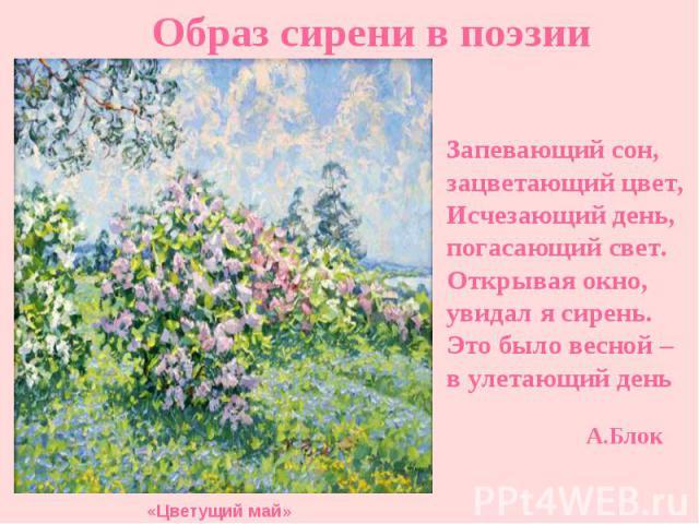Образ сирени в поэзии Запевающий сон, зацветающий цвет, Исчезающий день, погасающий свет. Открывая окно, увидал я сирень. Это было весной – в улетающий день «Цветущий май» А.Блок