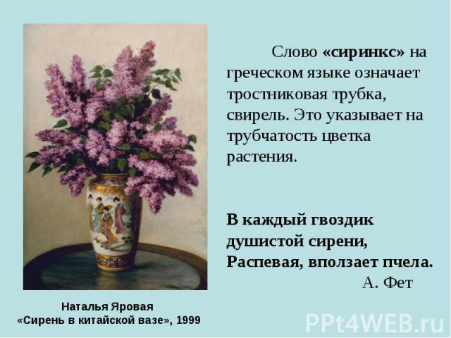 Слово «сиринкс» на греческом языке означает тростниковая трубка, свирель. Это указывает на трубчатость цветка растения. В каждый гвоздик душистой сирени, Распевая, вползает пчела. А. Фет Наталья Яровая «Сирень в китайской вазе», 1999