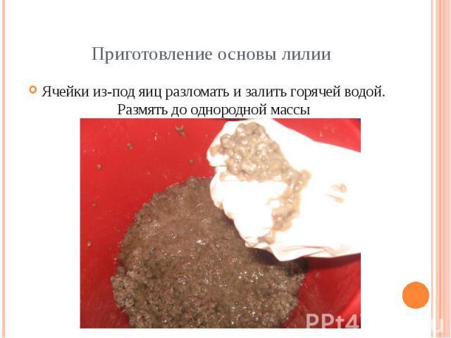 Приготовление основы лилии Ячейки из-под яиц разломать и залить горячей водой. Размять до однородной массы