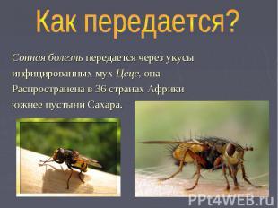 Как передается? Сонная болезнь передается через укусы инфицированных мух Цеце, о