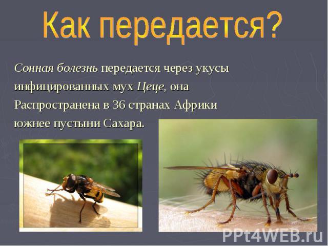 Как передается? Сонная болезнь передается через укусы инфицированных мух Цеце, она Распространена в 36 странах Африки южнее пустыни Сахара.