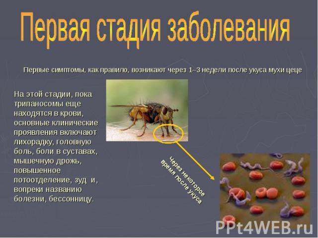 Первая стадия заболевания Первые симптомы, как правило, возникают через 1–3 недели после укуса мухи цеце На этой стадии, пока трипаносомы еще находятся в крови, основные клинические проявления включают лихорадку, головную боль, боли в суставах, мыше…