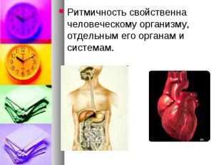 Ритмичность свойственна человеческому организму, отдельным его органам и система