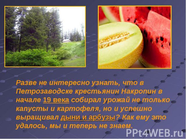 Разве не интересно узнать, что в Петрозаводске крестьянин Накропин в начале 19 века собирал урожай не только капусты и картофеля, но и успешно выращивал дыни и арбузы? Как ему это удалось, мы и теперь не знаем.